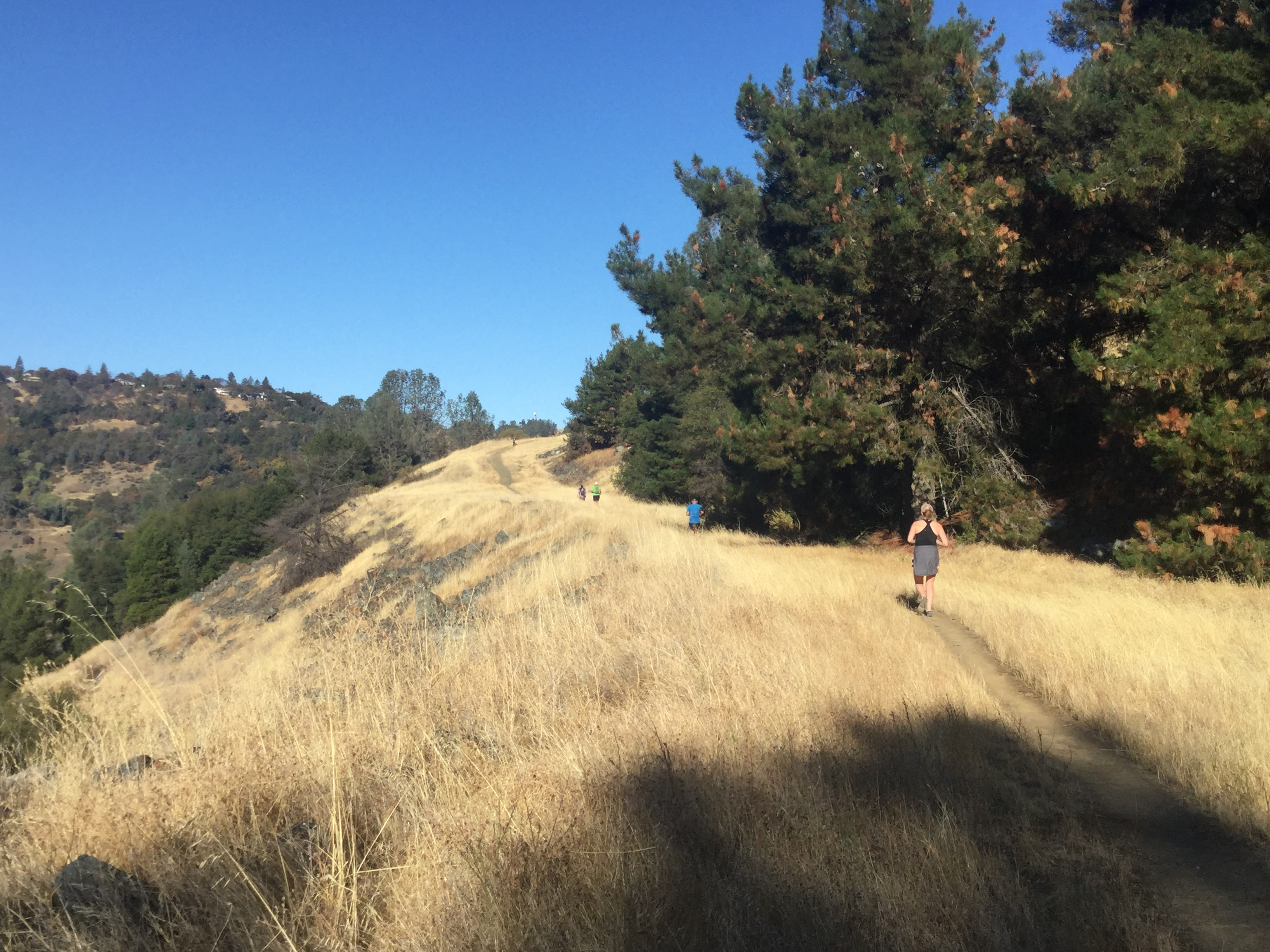 trail runners running up a hill